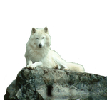 Wolf White stock PNG