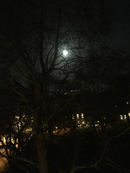20190817015159 - Light, Moon, Tree
