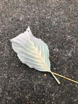 20191004200123 - Leaf's Rainbow