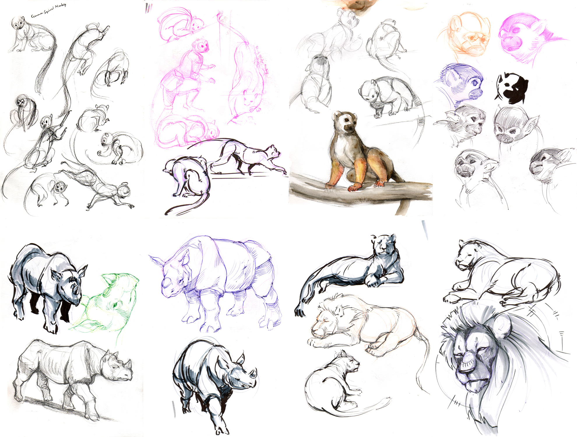 Line Drawings Of Zoo Animals : Zoo sketches by orangetavi on deviantart
