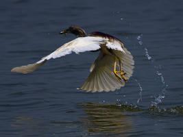 Flying Fisherman by InayatShah