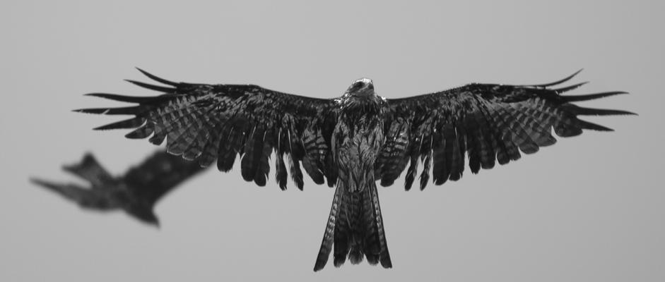 Spreading My Wings-II by InayatShah