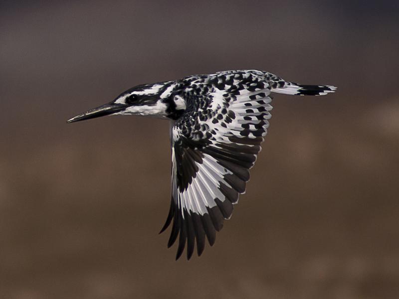 Wings Down by InayatShah