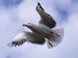 Gull Wings by InayatShah