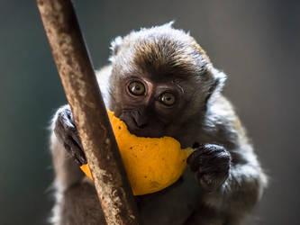 Batu Monkey - II by InayatShah