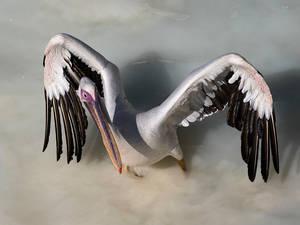 Kung Fu Pelican by InayatShah