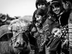 Do You Have A Pet Buffalo