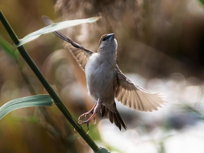 Sparrow - II by InayatShah