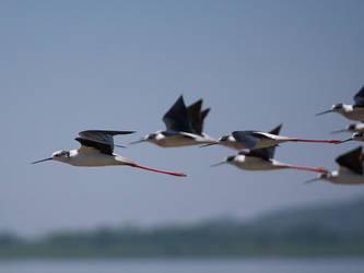 Leading The Flock by InayatShah