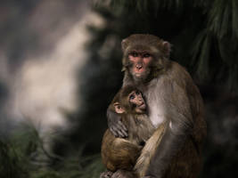 A Mothers Love - Need by InayatShah
