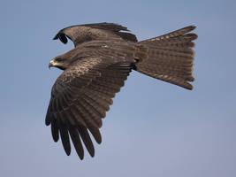 Flying Right by InayatShah