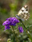 Butterfly Backlight