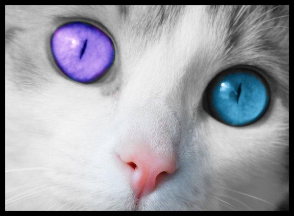 http://fc08.deviantart.net/fs25/f/2008/124/2/d/Cats_Eyes_by_Vickyville.png