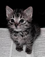 Smart Kitten by strawberryrepublic