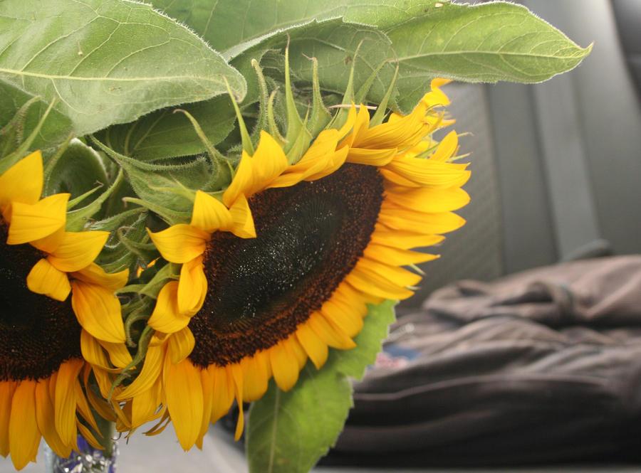 Sunflowersss by dfox1992