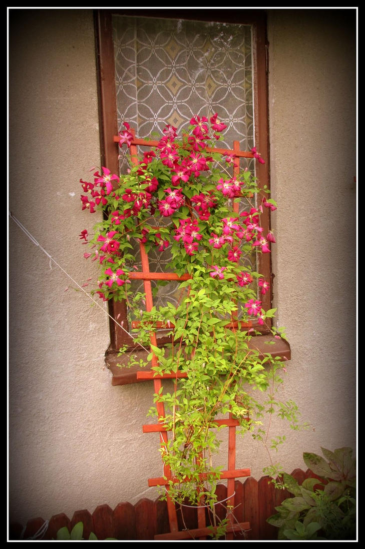 flowers and window by angel-ireth