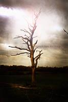 Haunted by Robyn-Jane