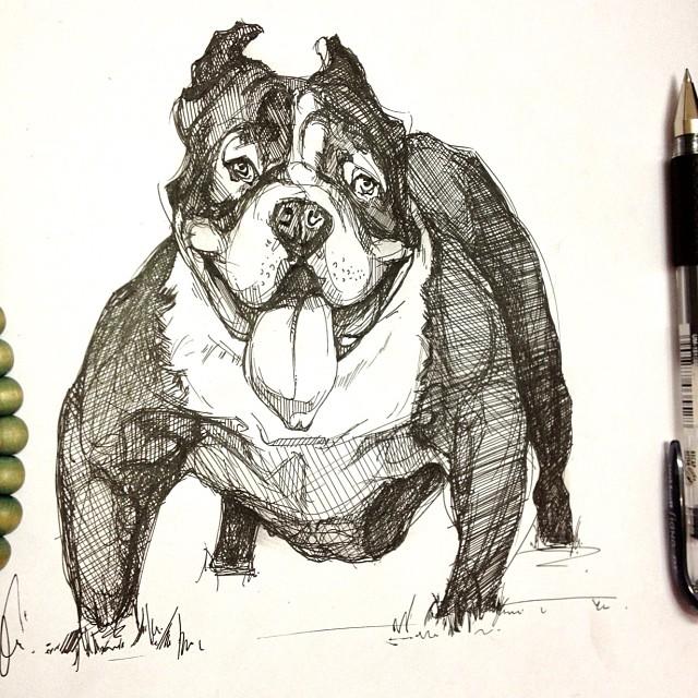 American bully (bull dog) by inoaix on DeviantArt