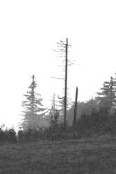 Black Forest 01 by glennsilver