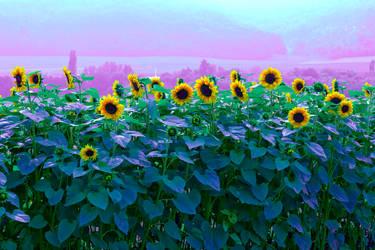Bayern 02 - Sunflower by glennsilver