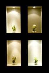 Four Plants by glennsilver