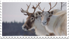 Caribou Stamp by Paws-of-Harmony