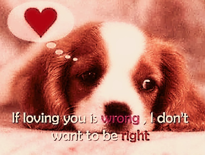 Funny Dogs Blog: Cute Puppy Pictures With Quotes Images ...