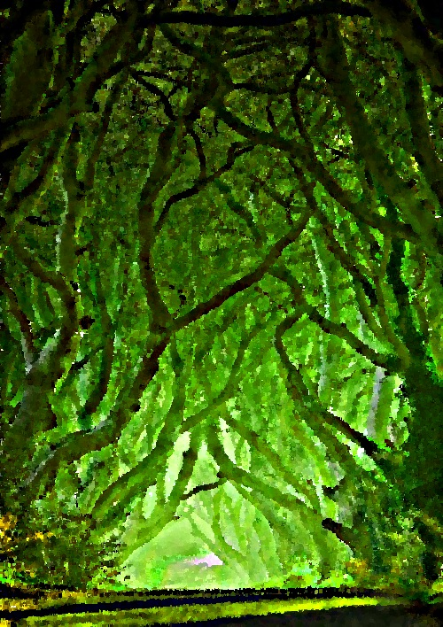 Trees by YOKOKY