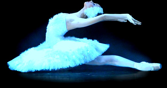 Swan-Lake-Odille the white swan by YOKOKY