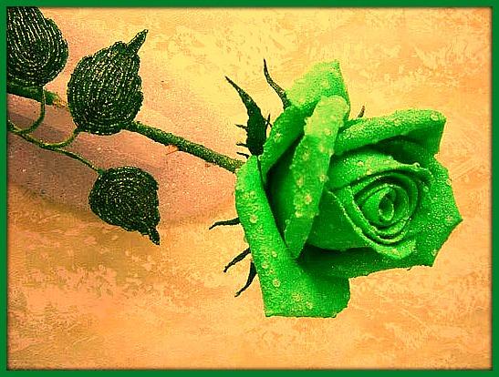 Green-Rose by YOKOKY