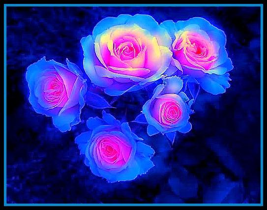 Splendor Roses by YOKOKY