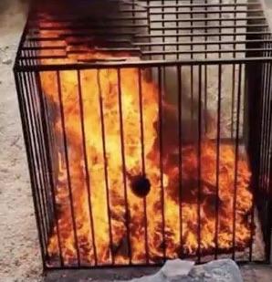 Cage-in Flame-jordanian Pilot by YOKOKY