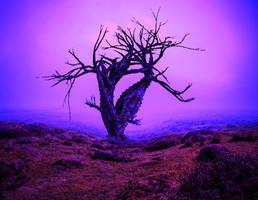 Landscape by YOKOKY