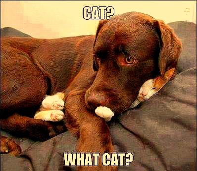 What Cat? by YOKOKY
