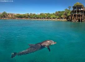 most beautiful beach in Israel - The Dolphin reef. by YOKOKY