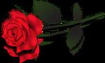 Red Rose By Madnier Co Dc3vzr9 By Yokoky Dc5o55g B by YOKOKY