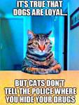 Cats Keep Secrets
