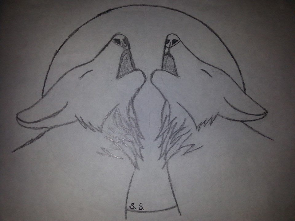 Two Wolves Together Drawing 59462 Movieweb