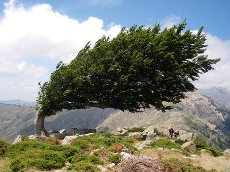 brown tree in the wind