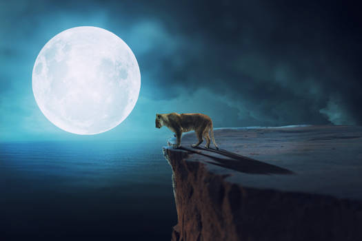 Lion Moon Fantasy Photo Manipulation