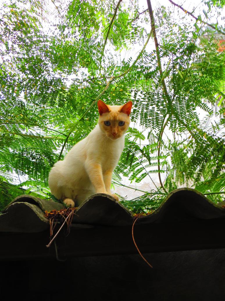 Angulo de gato by Shadowink1955