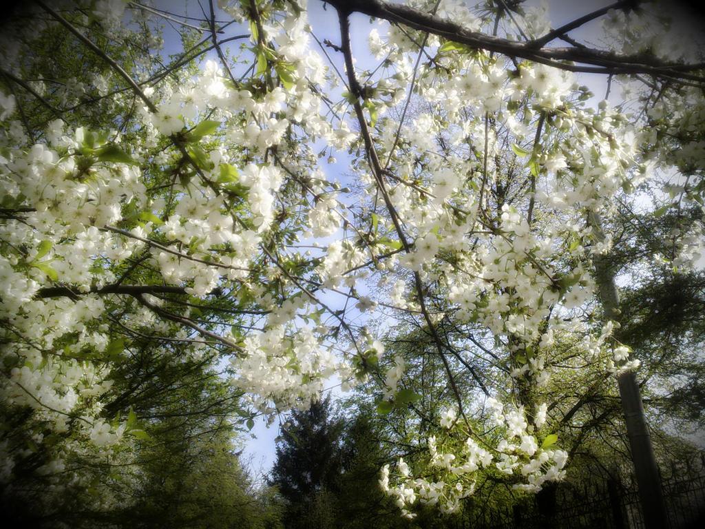 Blossom by lanamechanic
