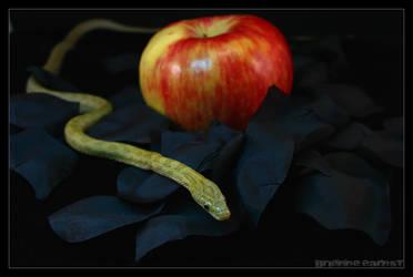 Desert Fruit by oOBrieOo
