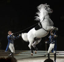 Lipizzan, mid air Courbette. by oOBrieOo