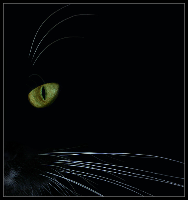 Douglas the Cat by oOBrieOo