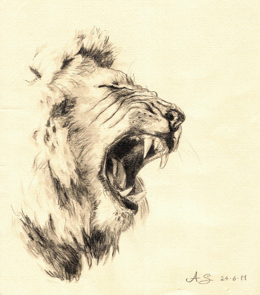 Sketches Of Lions | www.imgkid.com - The Image Kid Has It!