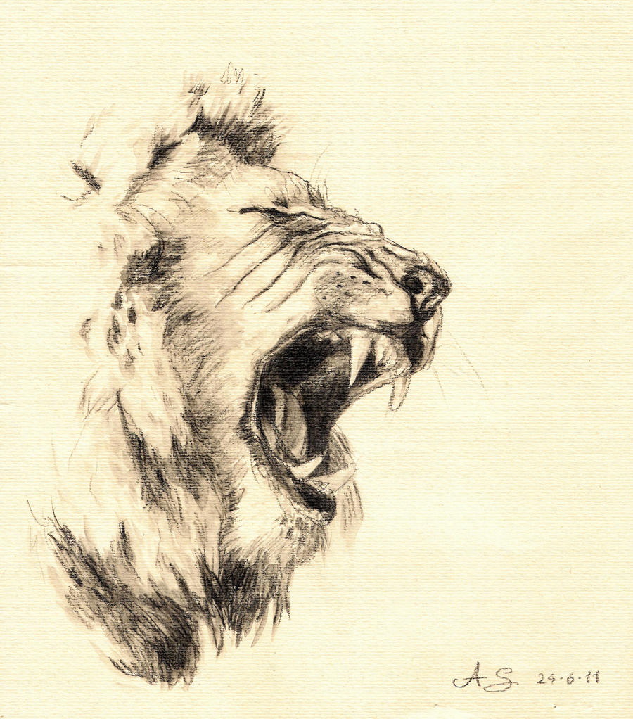 Lion - watersoluble pencil by AndreaSchepisi