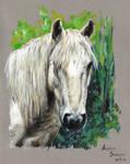 Horse - oil