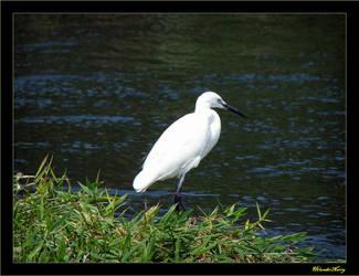 A Bird on the Nile by HilanderNarry