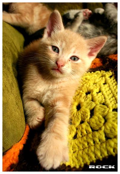 http://fc51.deviantart.com/fs11/i/2006/195/e/5/Red_Cat_by_RockRiderZ.jpg